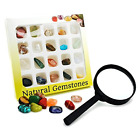 BEADNOVA Gemstone Rock Collection Kit for Kids Geology Science Learning with of